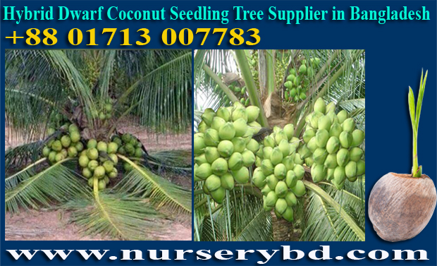Bangladesh Fruits Plant Nursery Supplier Company, Bangladesh Seed Supplier Company, Bangladesh Seeds Supplier Company, Bangladesh Seeds Company, Bangladesh Hybrid Seeds Company, Coconut Plant Nursery Supplier Company in Bangladesh, Bangladesh Aromatic Coconut Seedling Tree Supplier Company