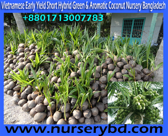 Vietnamese Coconut Tree Importer Supplier Company in Bangladesh, Vietnamese Coconut Tree Nursery in Bangladesh, Vietnamese Coconut Tree Supplier Company in Bangladesh, Vietnamese Green Xiem Coconut Tree Supplier Company in Bangladesh, Vietnam Coconut Tree Importer Company in Bangladesh