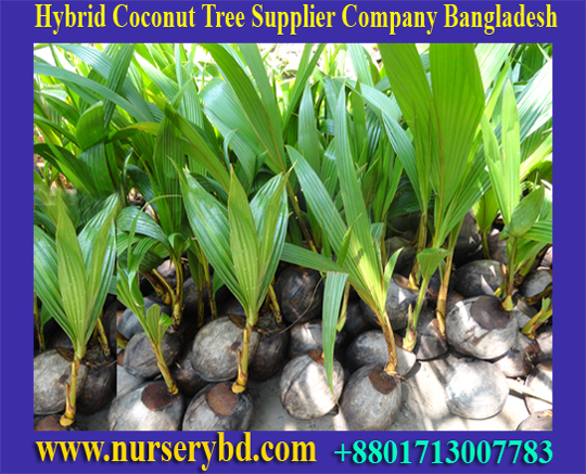 Vegetable Hybrid Seeds Supplier Company in Bangladesh, Bangladesh Vegetable Hybrid Seeds Supplier Company, Hybrid Vegetable Seeds Supplier Company in Bangladesh, Hybrid Vegetable Seeds Supplier Companies in Bangladesh, Hybrid Fruits Seeds Supplier Companies in Bangladesh