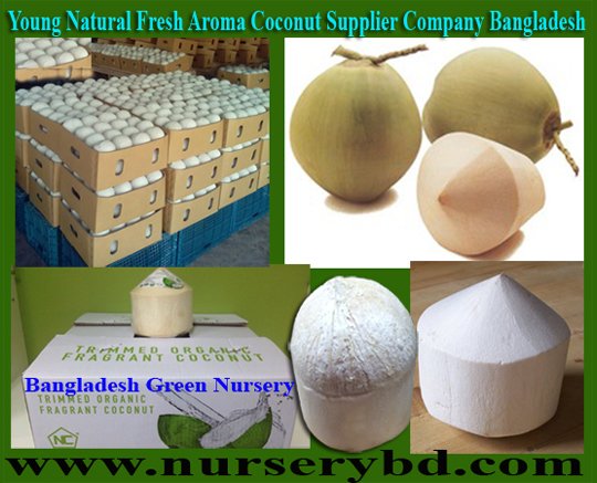 Fresh Young Coconut & Coconut Seedling Plants Suppliers Company in Vietnam, Fresh Young Coconut & Coconut Seedling Plants Suppliers Company in Thailand, Hybrid Early Yield Dwarf Coconut Seedling Tree Supplier Company in Bangladesh, Short Coconut Seedling Tree Supplier Company