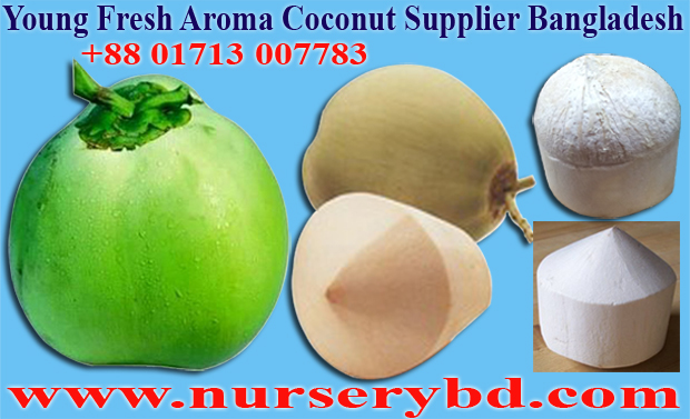 Hybrid Seeds Importer Exporter and Supplier Company Bangladesh, Hybrid Seeds Importer Exporter and Supplier Company in Bangladesh, Seeds Importer Exporter and Supplier Company in Bangladesh, Coconut Plant Nursery Supplier Company in Vietnam, Coconut Plant Nursery Supplier Company in Thailand